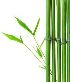 Is Bamboo A Viable Alternative To Carbon Fibre?  #Bamboo #Carbon Fibre #Alternative #Green Concept Cars, Carbon Fiber, Bamboo, Alternative, Green