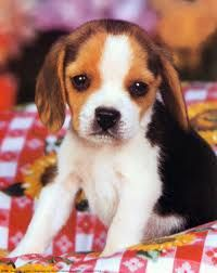 I will have him one day! <3
