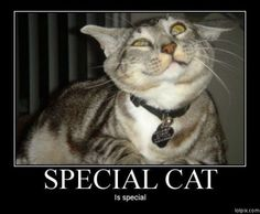 special cat. is special.