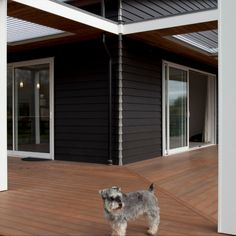 This adorable dog calls this modern house home. The contrasting white trim and black facade creates this stunning home. White Trim, Large Dogs, Cute Dogs, Facade, Pup, Architecture, Modern, House, Animals
