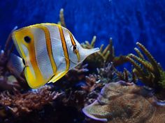 #sea #ocean #fish | Pin x Pets