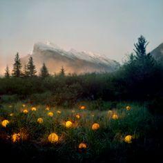 Электроточприбор: Светодиоды в пейзажах Барри Андервуда