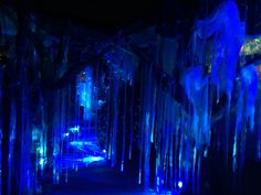 "Creepy, but beautiful forest....walkway leading up to front porch. Created from prop trees I picked for a steal from Spirit Halloween, strips of clear trash bags and the use of blue ""Fire and Ice"" lights (also obtained at Spirit Halloween)"