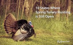 10 States Where Spring Turkey Hunting is Still Open - check out here to see if your state still open.  #realtreeblogs #turkeyhunting