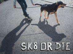 👑 Passeio radical com skate, consulta outros passeios em http://abanaacauda.com/ O Zurga usou um arnês especial facilitar o puxar.