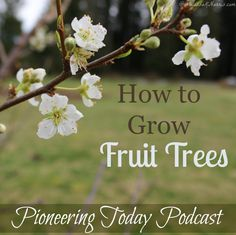 Learn how to grow fruit trees. If you ever wanted to grow your own food you'll need these tips to avoid costly mistakes. Learn which varieties you need and how to know which kind is right for your area.