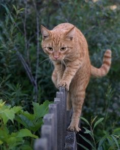 The first experience of walking on the fence. Photo by Ymbra