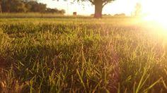 Took this photo of my yard