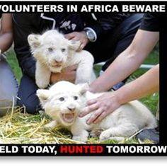 Volunteer In Africa, Volunteers, Being Ugly, South Africa, Notes, Good Things, Facebook, Places, Animals