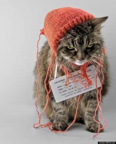 The last thing you will ever see should you give your cat an unfinished beanie... #lolcats