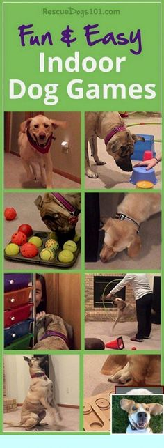 11 Fun and Easy Indoor Dog Games – Physical and mental exercise is so important for your dog's health, so when it's not possible to go outside, then turn to this list of indoor dog games. Dog Training Methods, Basic Dog Training, Dog Training Techniques, Training Your Puppy, Potty Training, Training Pads, Training Classes, Toilet Training, Leash Training