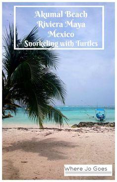 Sea Turtles & Snorkeling Akumal Beach, Riviera Maya, Mexico