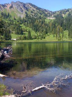 ten great hikes for kids near mt rainier