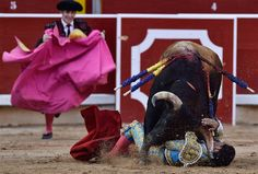 Alvaro Barrientos / AP Bullfighter narrowly escapes goring Spanish bullfighter Ivan Fandino is pinned by a fighting bull named 'Finito' and weighing around 1,100 pounds, after he was tossed in a bullfight in Pamplona, northern Spain, on Thursday. He was able to continue the fight and kill the bull. The annual San Fermin festival takes place from July 6-14, commemorating Pamplona's patron saint.