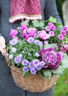 Basket Decoration, Plantation, Fall Flowers, Container Gardening, Flower Power, Seasons, Make It Yourself, Plants, Porches