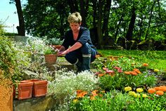 Article: Before you start a garden consider these excellent money saving tips Gardening Websites, Gardening Tips, Bug Hotel, Starting A Garden, Plant Cuttings, Beneficial Insects, Garden Gates, Cool Plants, Getting To Know You