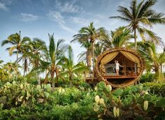 An eco-friendly oceanfront treehouse at Playa Viva... #treehouse #treehouseretreat
