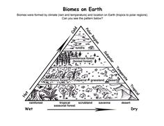 This is an ecological pyramid. It has six parts that make