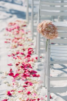 Hilton Clearwater Beach, Cleawater, FL, Beach Wedding, Destination Wedding, Rose Petals, Hygrandea, Aisle Decor, Iza's Flowers, Inc.