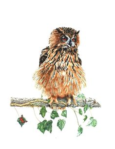 FineArtSeen - View Eagle Owl by Zoe Elizabeth Norman. Browse more art for sale at great prices. New art added daily. Buy original art direct from international artists. Shop now