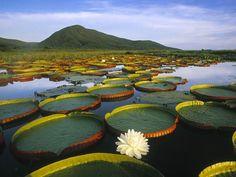 A data surgiu como forma de chamar atenção para o bioma e é celebrada em 5 de setembro