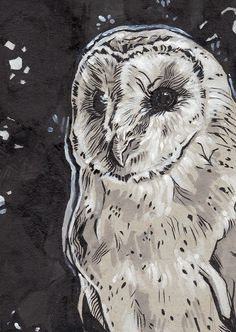 'Barn Owl' by Paris Taylor Jones