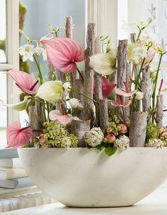 Interieur | Anthurium = Woonplant van de Maand Juni