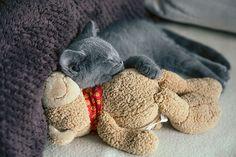 Amica 1 | Flickr - Photo Sharing!