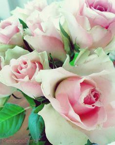 Rosen für den lieben Mr. M.!*