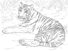 Siberian Tiger Laying down Coloring page