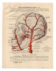 Vintage Illustration Print medical 1933 skull skeleton anatomical anatomy page nude human body old anatomic freak diagram bones brain