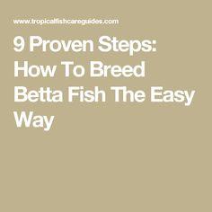 Breeding Betta Fish: 9 Proven Steps To Breed Betta Fish The Easy Way Beta Fish Care, Breeding Betta Fish, Betta Fish Tank, Facts, Easy