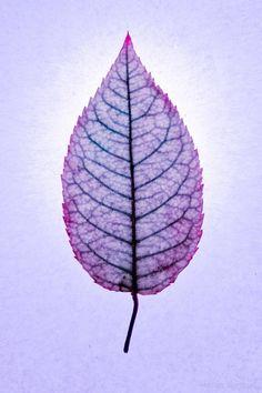 20101030-SQ-Mathieu-Blondeau-Leaves-037810.jpg