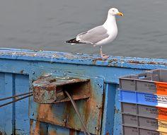 Guilvinec - retour de pêche attendu - Finistère - Bretagne - Louis Bourdon