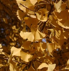 Yellow Leaves www.fiskars.com