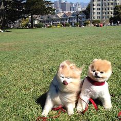 Fluffy puppies in the wind.