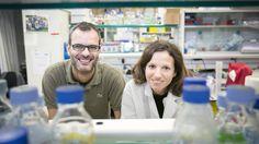 Un tratamiento experimental que bloquea el transporte de grasas disminuye este proceso en ratones