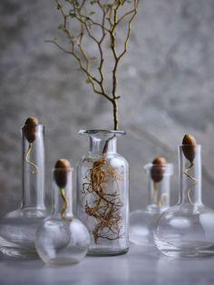 Hett just nu: Vackra vaser för dina sticklingar att gro i Interior Architecture, Interior And Exterior, Acorn, Glass Vase, Sweet Home, Bottle, Plants, Apartment Ideas, Home Decor