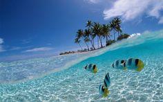 Bunaken island, Indonesia :)