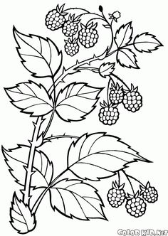 Coloring page - Berries Coloring Pages Nature, Fruit Coloring Pages, Abstract Coloring Pages, Pattern Coloring Pages, Printable Adult Coloring Pages, Flower Coloring Pages, Mandala Coloring Pages, Coloring Book Pages, Coloring Sheets