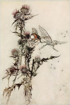 Kill me a red-hipped humble-bee on the top of a thistle - A Midsummer-Night's Dream by William Shakespeare, 1908