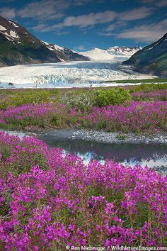 Spencer Glacier, Chugach National Forest, Alaska.  Can't wait to go on an Alaskan cruise