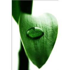 photo poster Water drops on bamboo in size: 70 x 110 cm by F. Art-FF77