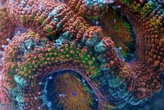 Watch Corals Move in Timelapse Video ... http://mentalfloss.com/article/55901/watch-corals-move-timelapse-video
