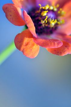 Fine Art Nature Photograph of Bright and by InLightImagery on Etsy, $30.00