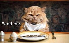 funny-animals-151 funny animal pictures pictures funny Animals