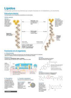 Lípidos biología