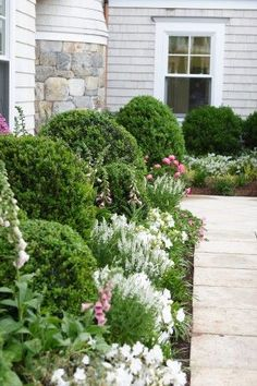 A pretty entryway with evergreen bushes and white and pink flowers