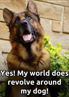 My world does revolve around my dog - and that's making me healthier! See how:  #dogs