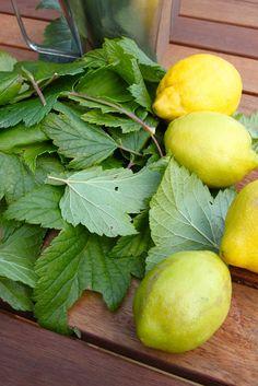Rebeccas DIY: Recept blackcurrent leaf lemonade